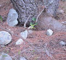 New life born among the rocks by Efthimios Senis