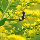 Busy Bee by ashleyt