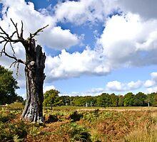 Richmond Park in Autumn by Lisa Williams