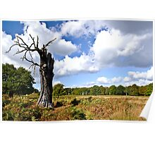 Richmond Park in Autumn Poster