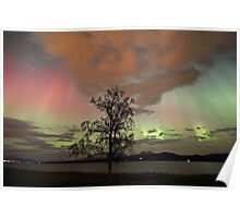 Auroras with multiple colors Poster
