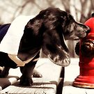 A Dog and A Fire Hydrant  by susan stone
