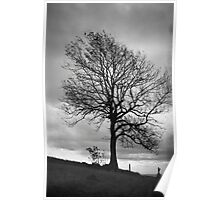 Lone Tree, Waseley Hills Country Park Poster