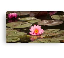 Pink Water Lily Floating Canvas Print