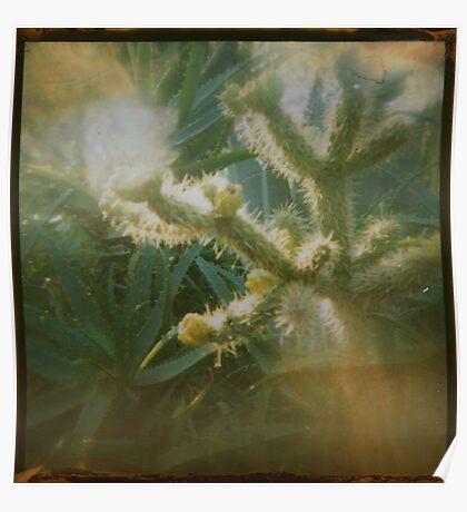 the cacti garden Poster