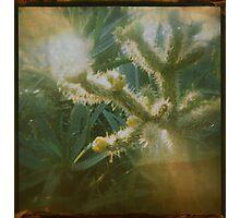 the cacti garden Photographic Print