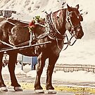 Horse and Buggy by Tracy Riddell