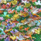 Painted Fall by Guy Jenkins