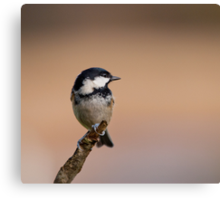 Coal tit Canvas Print