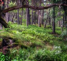 Into the wildwood by Carina514