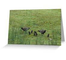 Native Hens and chicks first house visit Greeting Card