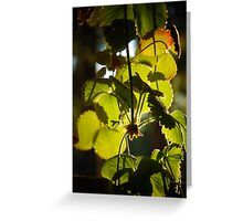 Strawberry Plant in Sunlight Greeting Card