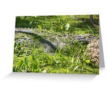 Laying an Waiting, Alligator Greeting Card
