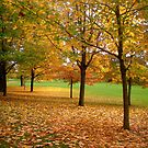 Fall trees - Ottawa , ON by Shulie1