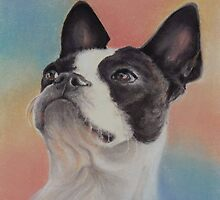 My Sweet Boston Terrier, in pastels by Pam Humbargar