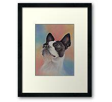 My Sweet Boston Terrier, in pastels Framed Print