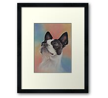 My Sweet Boston Terrier, in pastels Framed Print