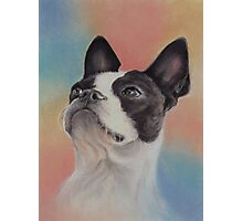 My Sweet Boston Terrier, in pastels Photographic Print