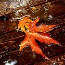 rainy autumn by Mustafa UZEL