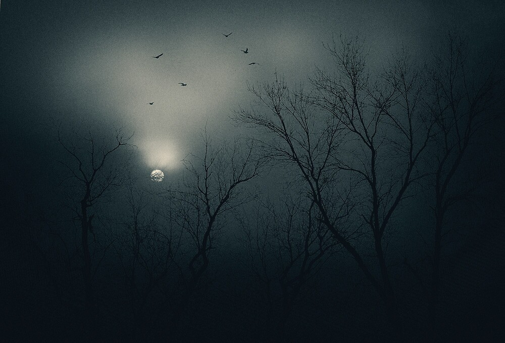Winter's Light by vividpeach