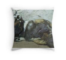 Sleeping painted dog Throw Pillow