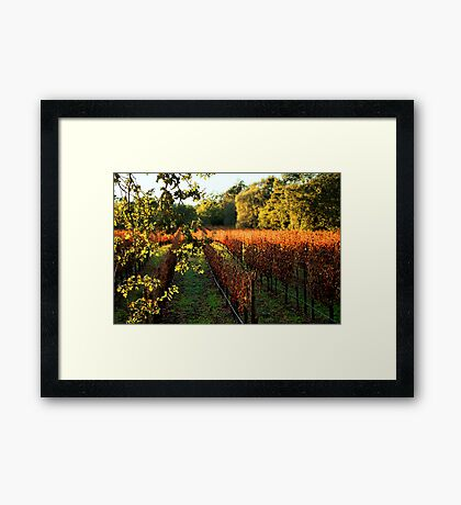 Late Autumn View of Napa Valley 2 Framed Print