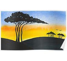 Acacia Poster