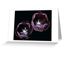 Dark and Mysterious - Burgandy Tulips Greeting Card