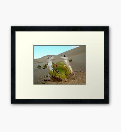 Spade-footed Geckoes - Namibia Framed Print