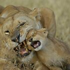 Lioness Bonding with Cub - Tanzania by Austin Stevens