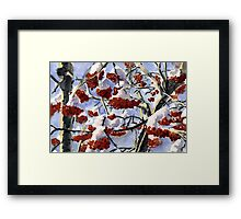 Winter Berries Framed Print