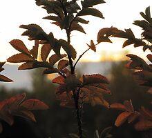 Darkened Bush by Kathi Arnell