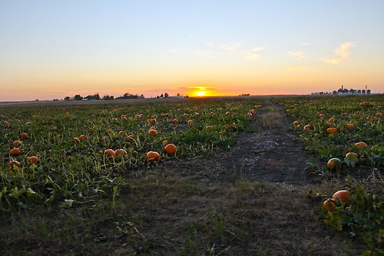 Pumpkin Patch by Jordan Selha