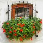 Window with Geranium, Hungary 2011 by Lyz48