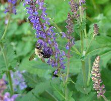 Bumble Bee & Flowers by TammiHoward