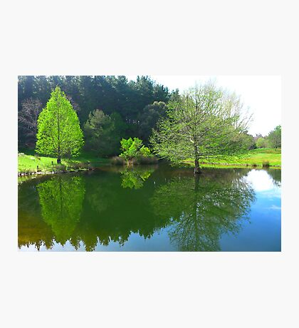 The Duck Pond - Robert Mann Photographic Print