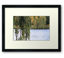 'Weeping Willow' Framed Print