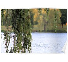 'Weeping Willow' Poster