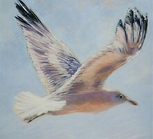 Seagull in flight. Elizabeth Moore Golding 2010 Ⓒ by Elizabeth Moore Golding