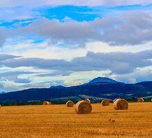 Farmlands by Tek-Photography