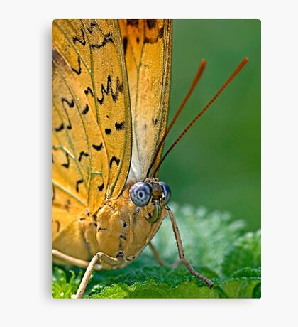 Julia Butterfly Canvas Print