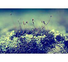 Macro world Photographic Print