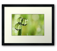 A Lawn in a Blade of Grass Framed Print
