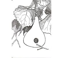 Gourd & Cottonwood Photographic Print
