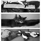 The Art of Sleep by Anne Staub