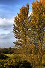 Golden Autumn In Suffolk by Darren Burroughs