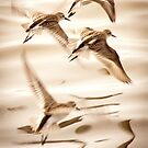 """Mystical Flight"" - shorebirds on Assateague Island, Maryland by John Hartung"