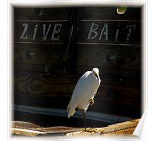 Birds On Pier : Strategic Perch Poster