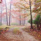 Into The Autumn Mist by NatureGreeting Cards ccwri