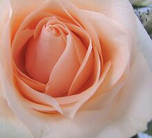 The Centre of a Rose by orko